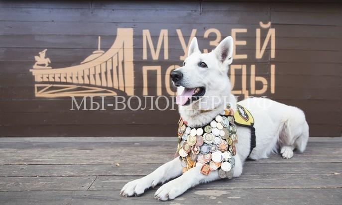 Всероссийская акция «День фронтовой собаки»