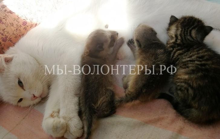 Кошка из Новосибирского зоопарка выкармливает двух маленьких енотов