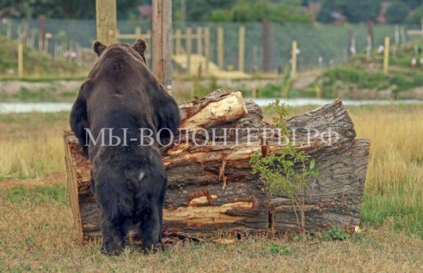 Медведей выпустили в парк дикой природы после 17 лет заточения в клетке