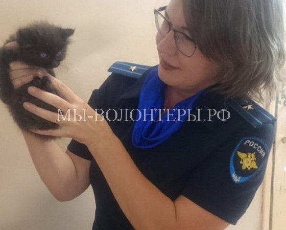 Сотрудники полиции Приморья спасли котенка с проезжей части