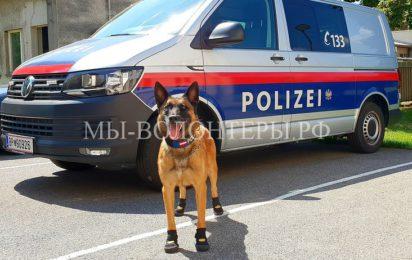 Служебные собаки в полиции Австрии надели ботинки для защиты лап горячего асфальта