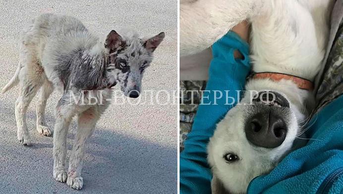 Эта собака была обречена, но человеческая доброта подарила ей счастливую жизнь