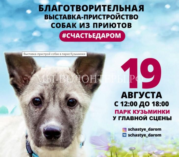 Счастье даром! Выставка-пристройство собак в парке Кузьминки