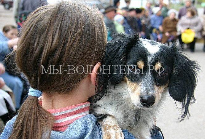 Московских школьников научат ответственному обращению с животными