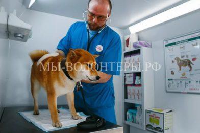 Домашние животные смогут пройти бесплатную диспансеризацию