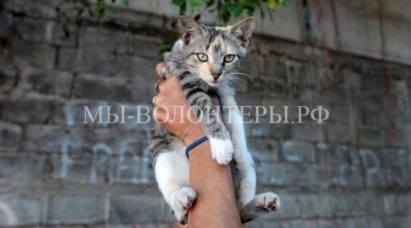 В Бельгии ежегодно усыпляют около 10 тысяч брошенных и потерявшихся кошек