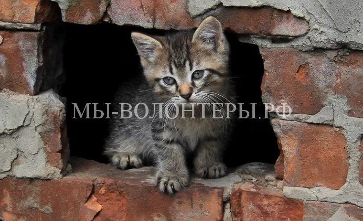Министерство строительства утвердилоразмеры подвальных окон для доступа животных