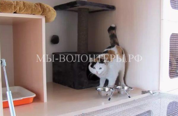 В Москве на базе ветучреждений открыты гостиницы для животных
