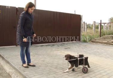 В Челябинске псу Марвелу волонтеры смастерили инвалидную коляску