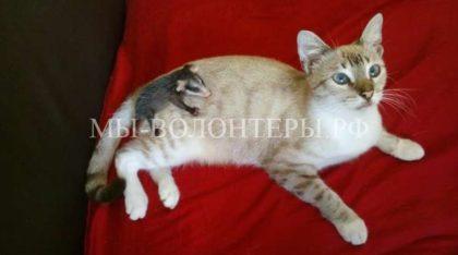 Кошка нашла и усыновила опоссума