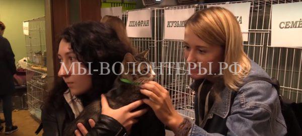 Петербургская выставка-раздача кошек «Кошка на окошке»