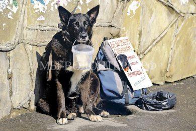 Воры на собачьем доверии: как мошенники зарабатывают деньги на якобы лечение бездомных животных