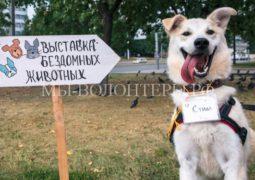 Благотворительная выставка бездомных животных «Осенний хвостофест»