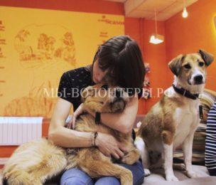 В Калуге открывается первое в городе пёсокафе