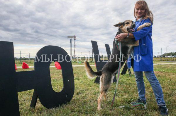 Открылся первый российский многофункциональный центр реабилитации бездомных животных