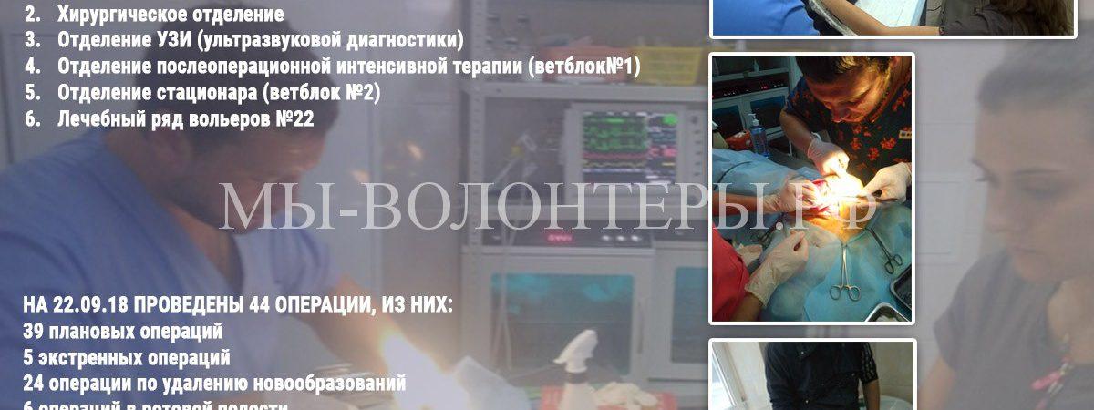 Ветклиника приюта «Щербинка», итоги март/сентябрь 2018:  6 вет.отделений (+УЗИ), штат 9 ветврачей, 44 операции (98% успех)