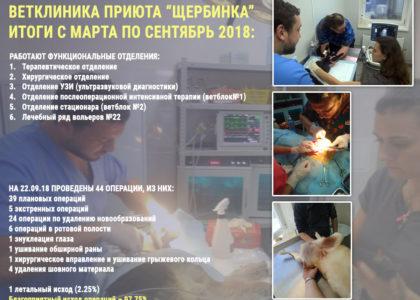 Ветклиника приюта Щербинка, итоги за 4 месяца