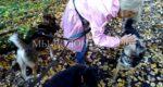 ВИДЕО: Прогулки с подопечными, приют Щербинка, последние теплые деньки октябрь 2018