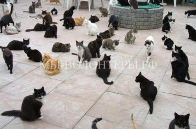 На Кипре появятся специальные места для кормления бездомных кошек
