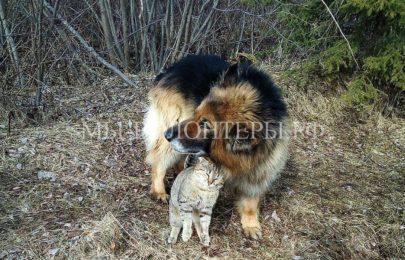 Пес Том и кот Тоха вот уже три года неразлучные друзья
