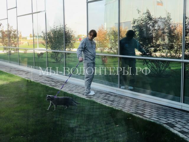 Открылся первый в России центр изучения питания домашних животных