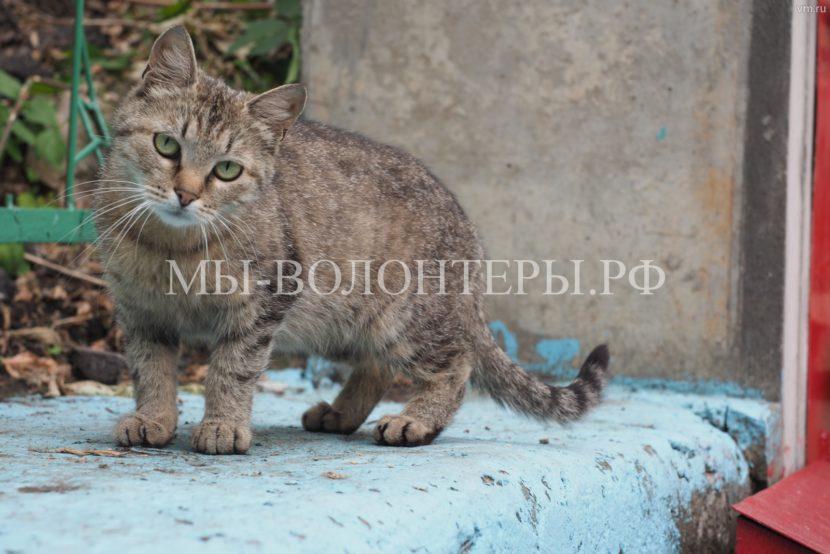 Благотворительная выставка «Каждой кошке нужен дом»