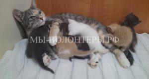 Кошка Муся-талисман подводной лодки стала мамой на глубине 200 метров