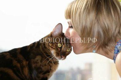 Типы личности кошек или почему некоторые люди выбрасывают кошек наулицу