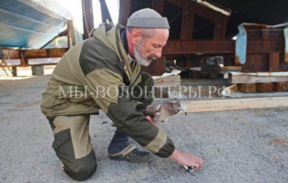 Пострадавшую слепую чайку рыбаки приютили, выхаживают и не дают в обиду