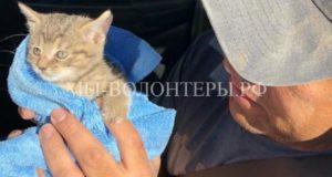 Семья спасла 10 кошек и 9 котят из брошенного дома