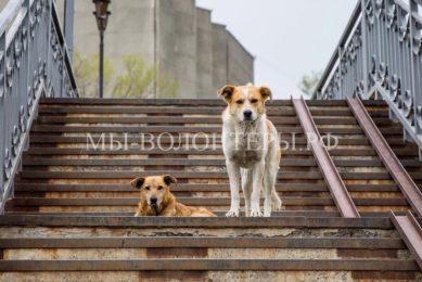 На содержание безнадзорных животных в столице выделят более 2 млрд рублей на три года