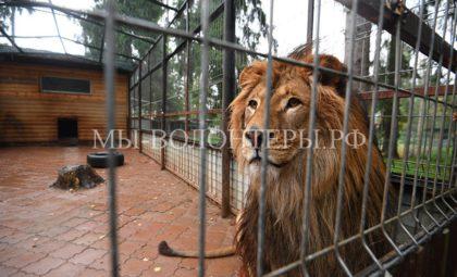 Как живут попавшие в беду дикие животные в Центрепередержки Департамента природопользования