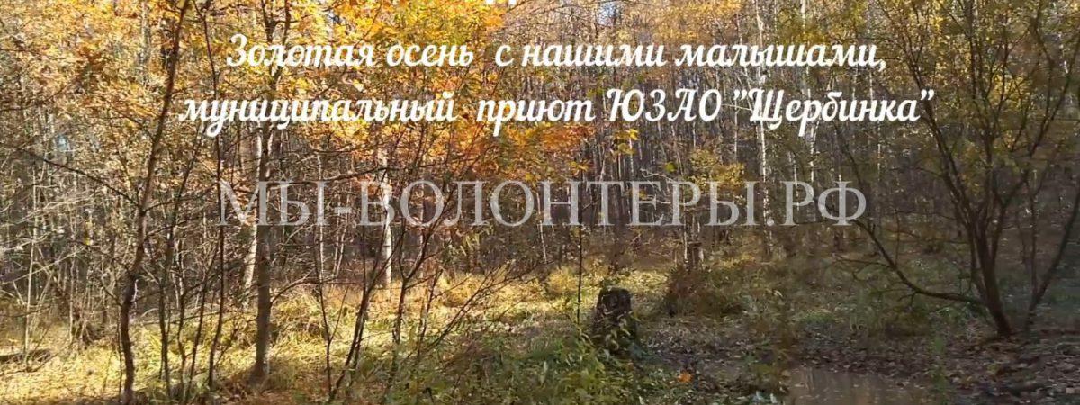 Золотая осень 2018, мы, волонтеры, и наши подопечные приюта ЮЗАО «Щербинка»