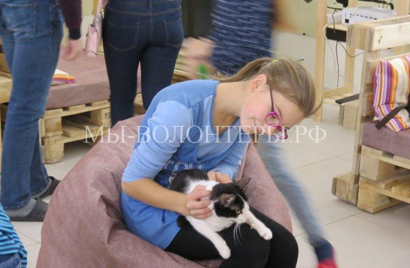 Шуня, Бархотка и другие питомцы из приюта теперь постояльцы кото-кафе