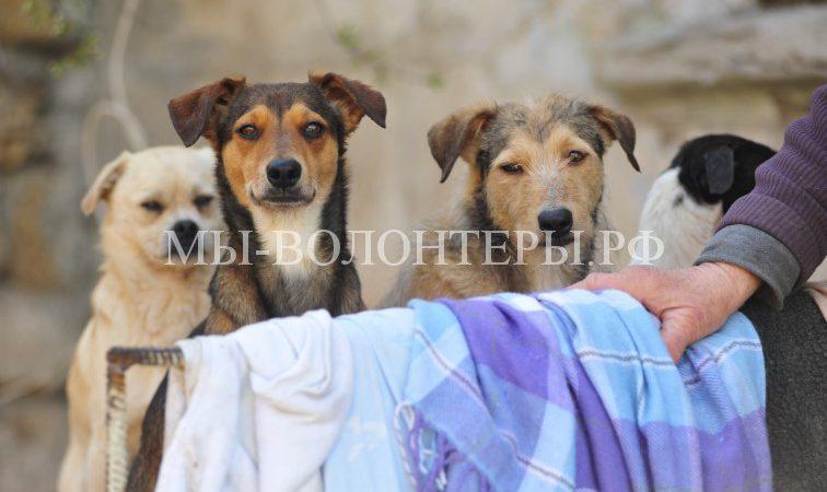 Проблема бездомных животных в Севастополе