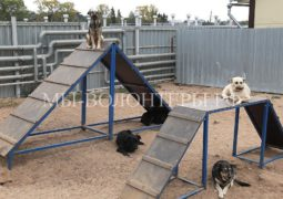 Инициатива депутатов Госдумы - возвращать животных из приютов в среду обитания после вакцинации