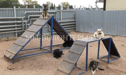 Инициатива депутатов Госдумы — возвращать животных из приютов в среду обитания после вакцинации