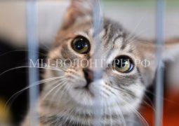 Министерство юстиции поддержало принятие проекта Закона об ответственном обращении с животными