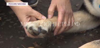 Российские ученые разработали уникальный имплант и вживили овчарке Марте