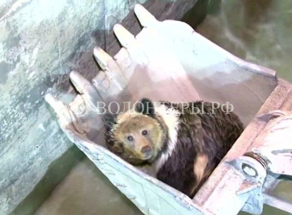 Спасение медвежонка на китайской ГЭС
