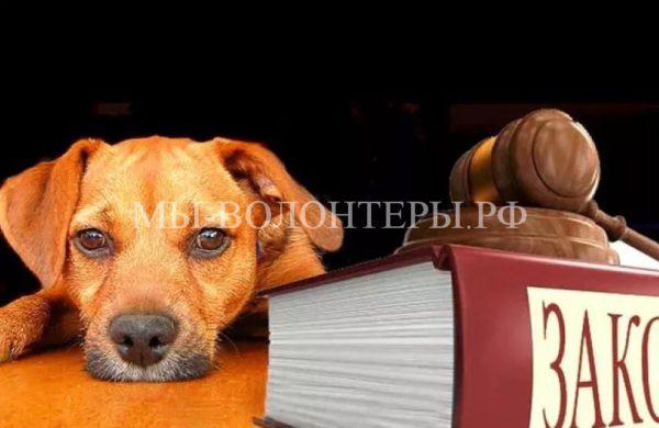В России приняли законопроект о защите животных