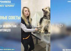 «Советы грумера Марии Трофимовой», 1-й выпуск «Уход за шерстью животного»
