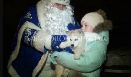 Липецкая школьница получила щенка от Президента РФ на Новый год