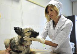 Москвичи могут записать питомцев на прием к ветеринару через портал госуслуг