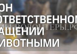18 декабря Госдума рассмотрит резонансный законопроект об ответственном обращении с животными