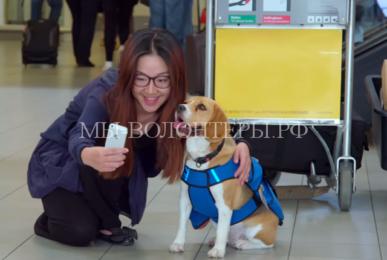 Собаки помогают авиапассажирам справиться с аэрофобией