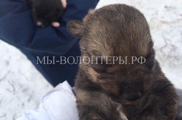 Спасение щенков из ледяной полыньи