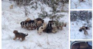 Житель Рязанской области спас 20 щенков, выброшенных в лесу