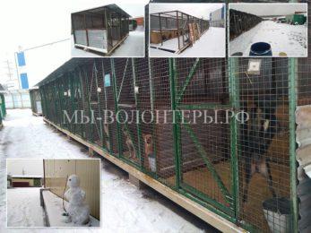 Первые  Собаки-Новоселы — переезд из убогих  «выселок» в новые вольеры в приюте «Щербинка»