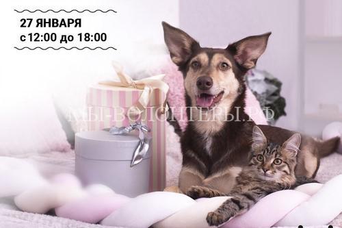 27 января пройдет выставка-пристройство животных из приютов